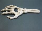 Skelett Hand Flaschenöffner aus Gusseisen 17 cm Knochen Gothic Party